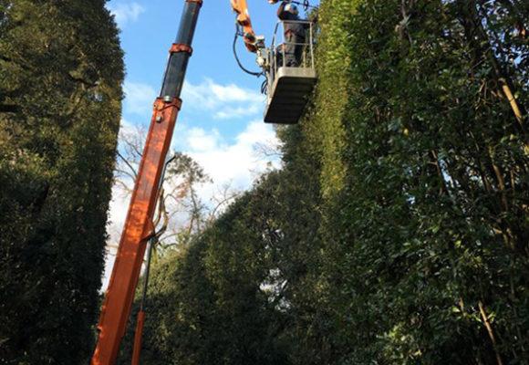 Interventi di potatura restauro parco di Villa Reale