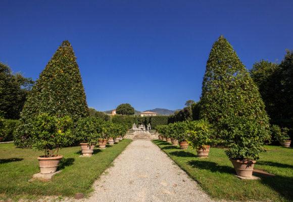 Viale centrale del Giardino dei Limoni, Villa Reale di Marlia - Foto di Vincenzo Tambasco