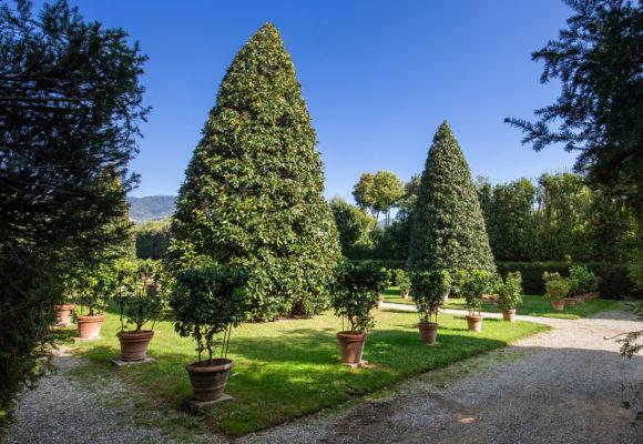 I Limoni di Villa Reale di Marlia - Foto di Vincenzo Tambasco